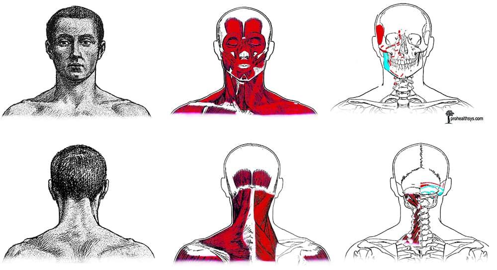 C-spine & Neck - Prohealthsys
