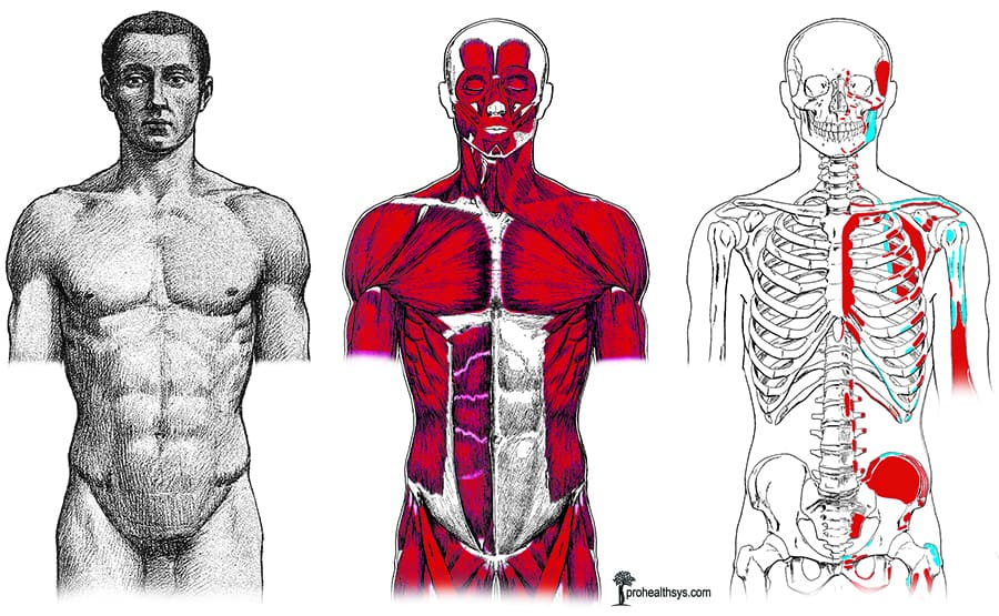 body layers anterior vizniak